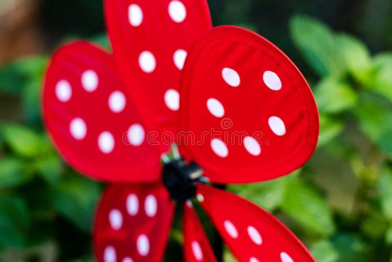 El rojo del extracto de la perinola del jardín con la mariquita blanca puntea imagenes de archivo