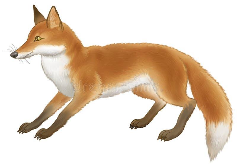 El rojo del zorro ilustración del vector
