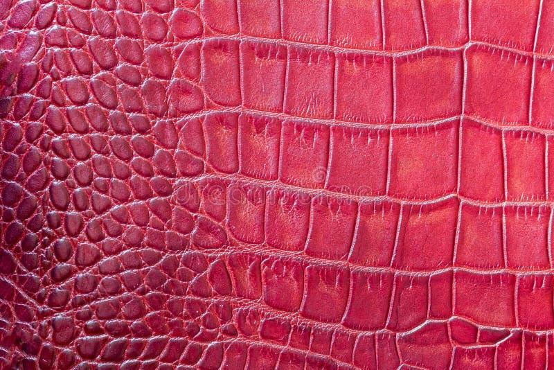 El rojo escala el fondo exótico macro, grabado en relieve debajo de la piel de un reptil, cocodrilo Primer del cuero auténtico de imagen de archivo