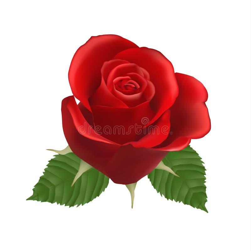 El rojo floreciente se levantó Vector ilustración del vector