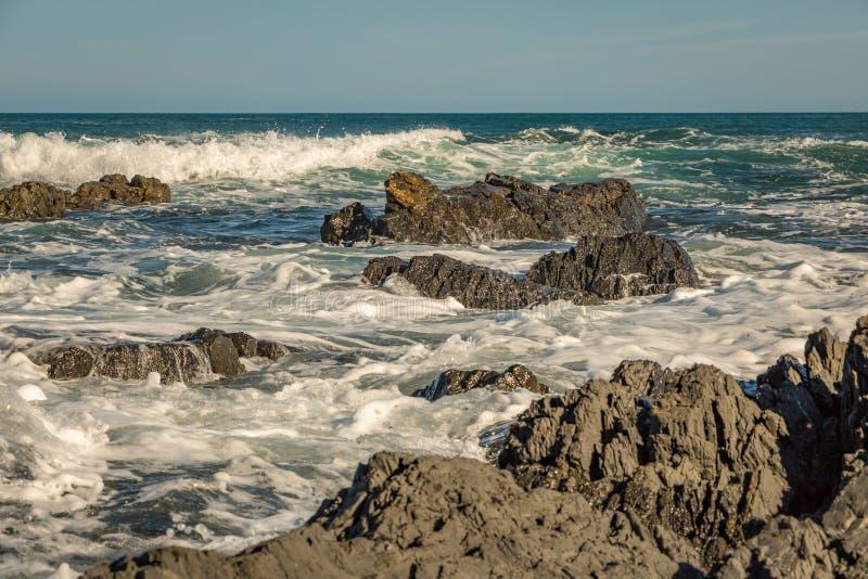El rojo oscila la línea de la playa, Wellington New Zealand imágenes de archivo libres de regalías