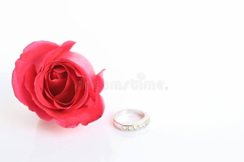 El rojo se levantó con el anillo imagen de archivo