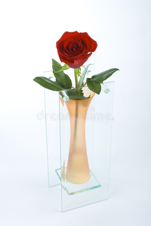 El rojo se levantó en el florero anaranjado fotografía de archivo