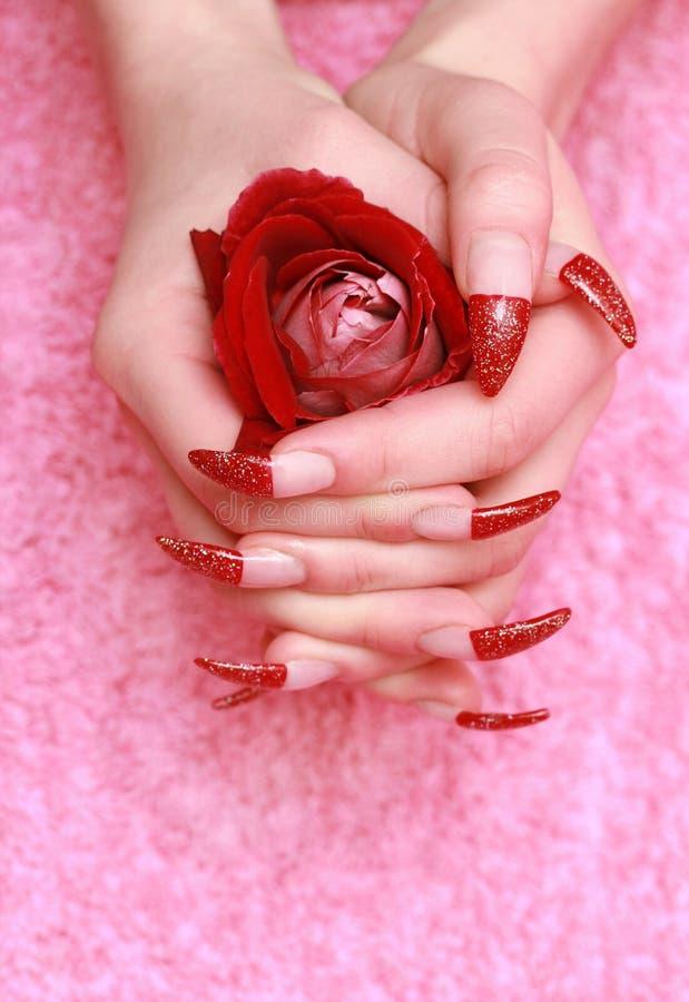 El rojo se levantó para las manos femeninas fotos de archivo libres de regalías