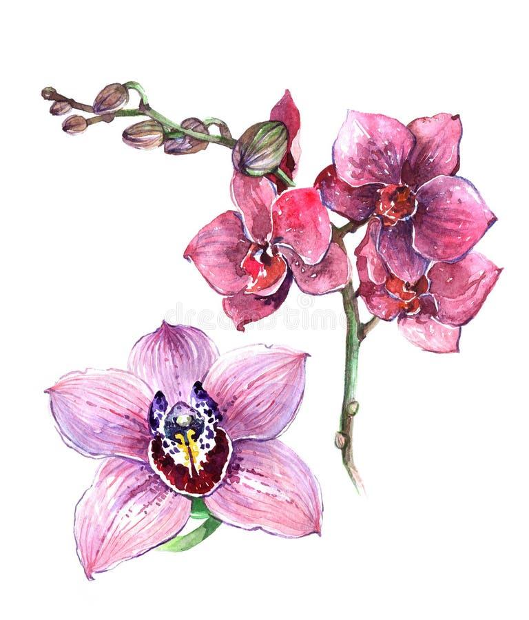 El rosa de la acuarela y el ramo anaranjado de la orquídea aislaron libre illustration