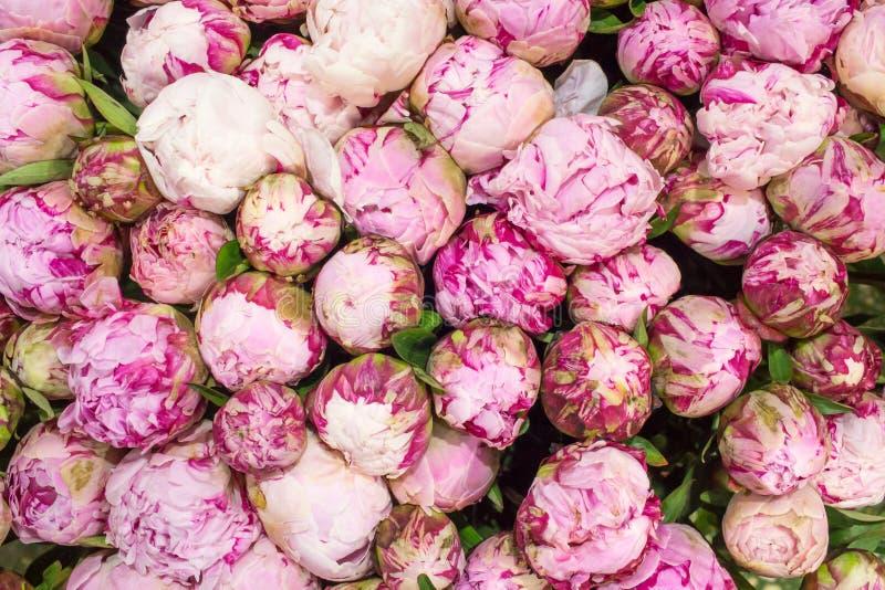 El rosa florece el primer del fondo, marco completo fotografía de archivo