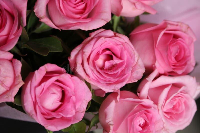 El rosa florece tiros cercanos fotos de archivo libres de regalías