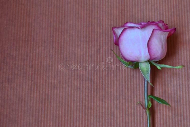 El rosa subió en el fondo marrón imagen de archivo