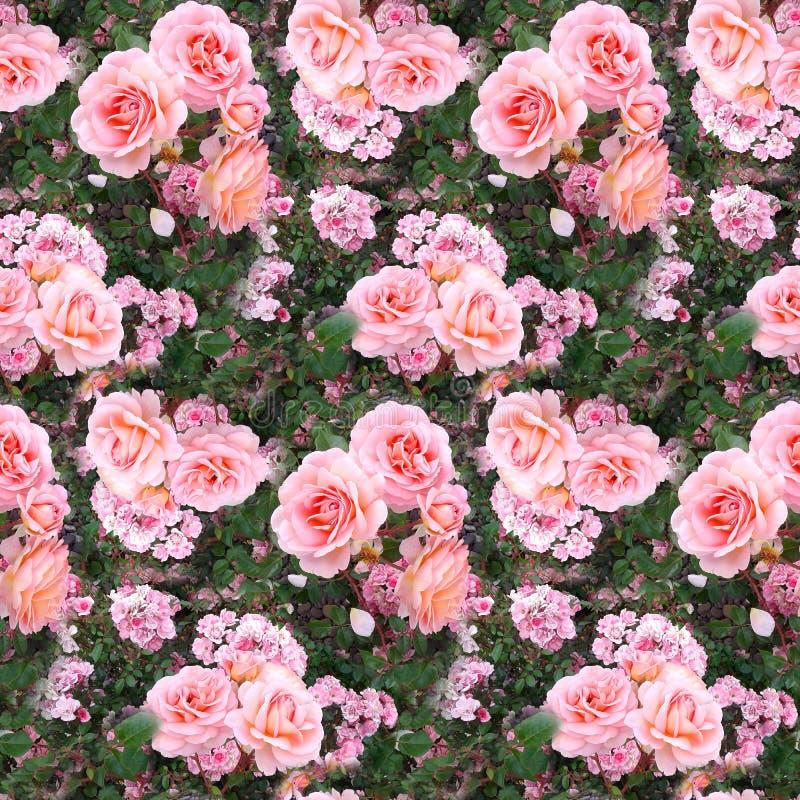 El rosa subió fondo inconsútil de la textura del modelo de la naturaleza del verano de la hierba del jardín de flores imagenes de archivo
