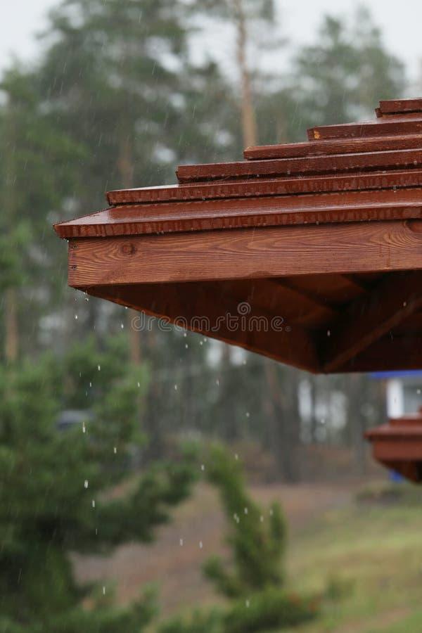 El ` s que llueve en las gotas de lluvia del bosque del pino baja continuamente con un fondo verde borroso de la naturaleza imagen de archivo