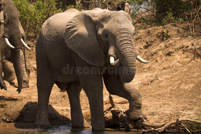 el safari baja Zambezi imagenes de archivo