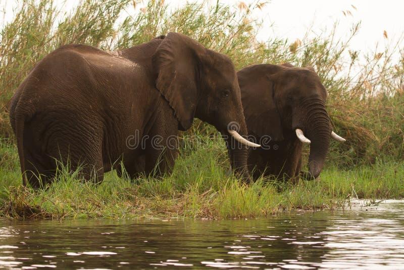 El safari baja Zambezi fotos de archivo