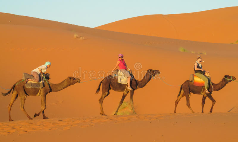 El safari en camellos apoya en Sáhara foto de archivo libre de regalías