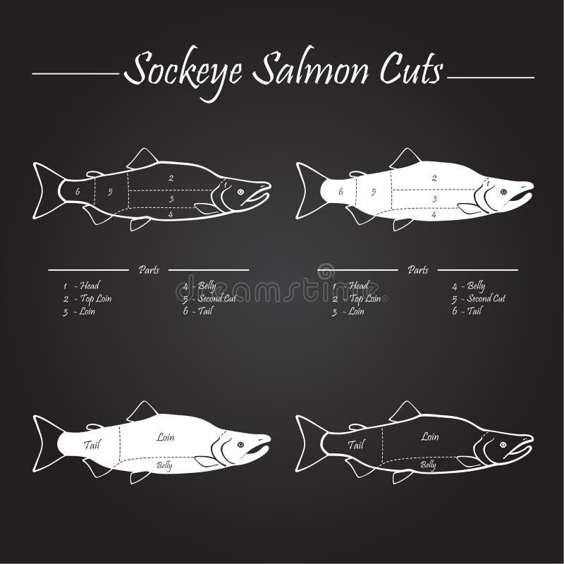 El salmón de Sockeye corta el diagrama ilustración del vector