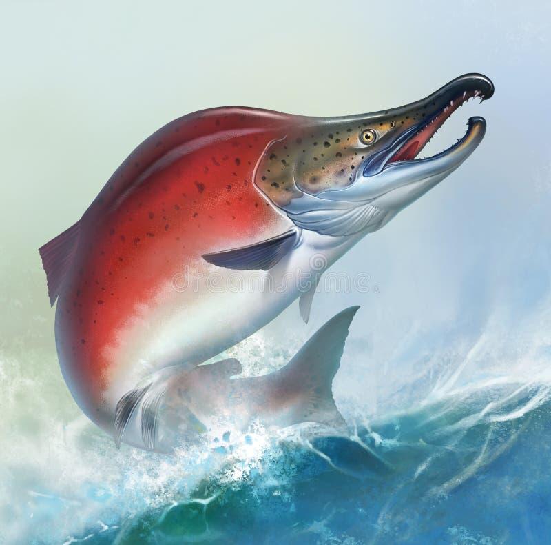 El salmón rojo en el fondo blanco salta del agua, frezando pescados, caviar rojo Ejemplo realista de color salmón rojo Pescados r imagen de archivo