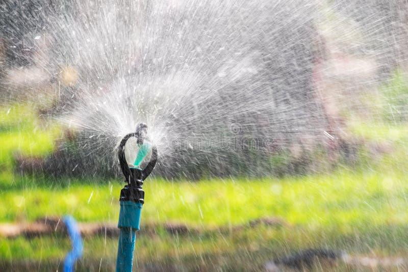 El saltador del agua que trabaja en el jardín salpica el agua dulce imagen de archivo