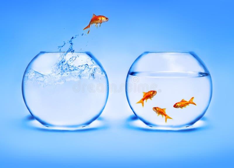 El saltar del Goldfish del agua imagenes de archivo