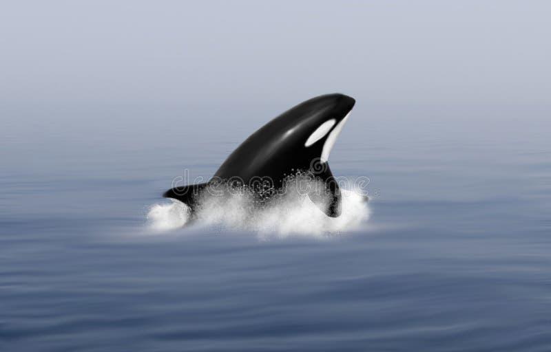 El salto de la ballena de la orca ilustración del vector