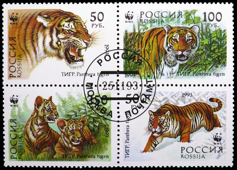 El sello cuatro impreso en Rusia muestra el altaica siberiano de Tiger Panthera el Tigris, fauna rusa, serie de los tigres de Uss fotos de archivo libres de regalías