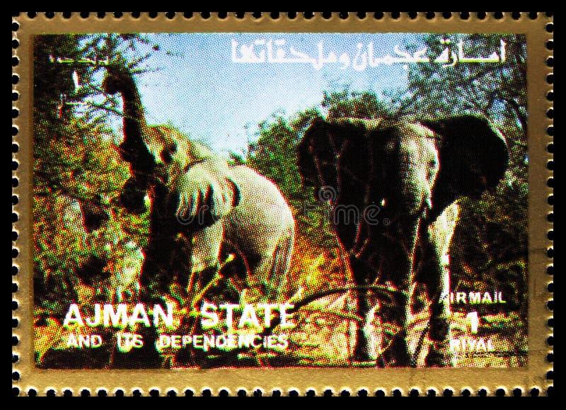 El sello de la imagen impresa en Ajman (Emiratos Árabes Unidos) muestra elefante africano (Loxodonta africana), mamíferos, serie  foto de archivo libre de regalías