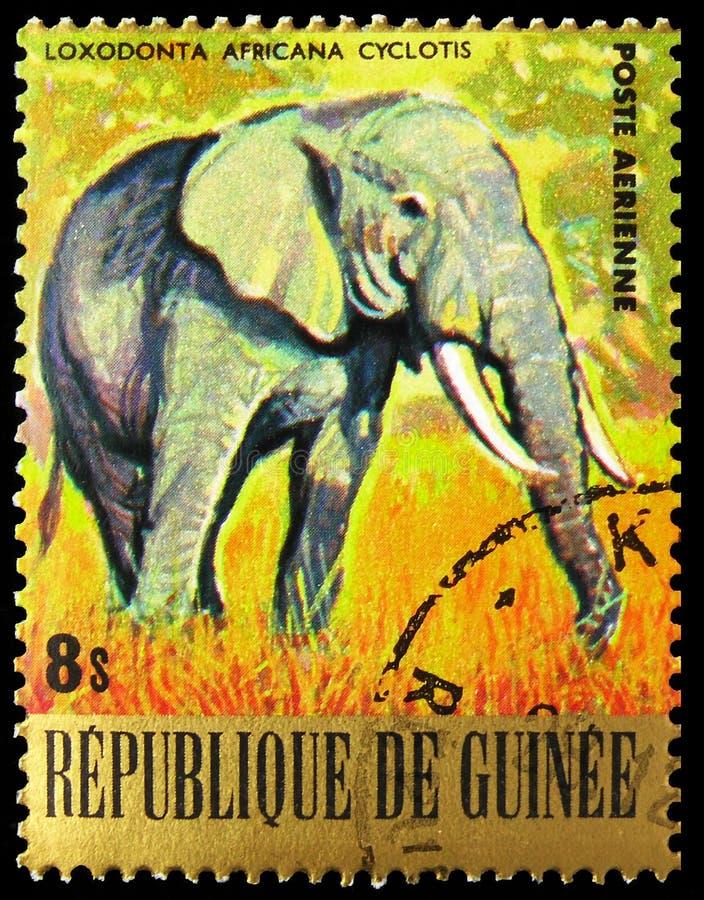 El sello de los pancartas impreso en Guinea muestra la serie African Elephant (Loxodonta africana), Endangered Animals, alrededor fotografía de archivo