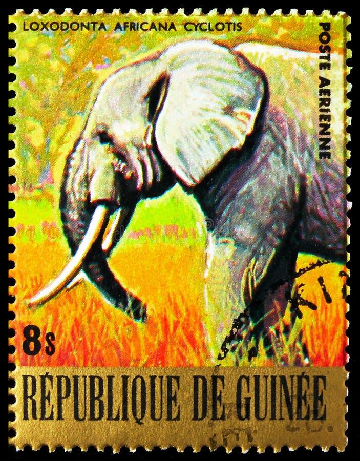 El sello de los pancartas impreso en Guinea muestra la serie African Elephant (Loxodonta africana), Endangered Animals, alrededor foto de archivo libre de regalías