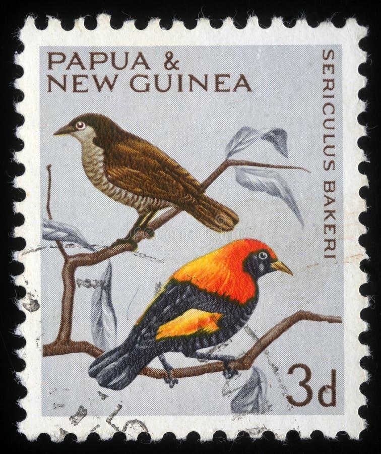 El sello impreso en Papúa Nueva Guinea muestra un pájaro, bakeri del sericulus imágenes de archivo libres de regalías