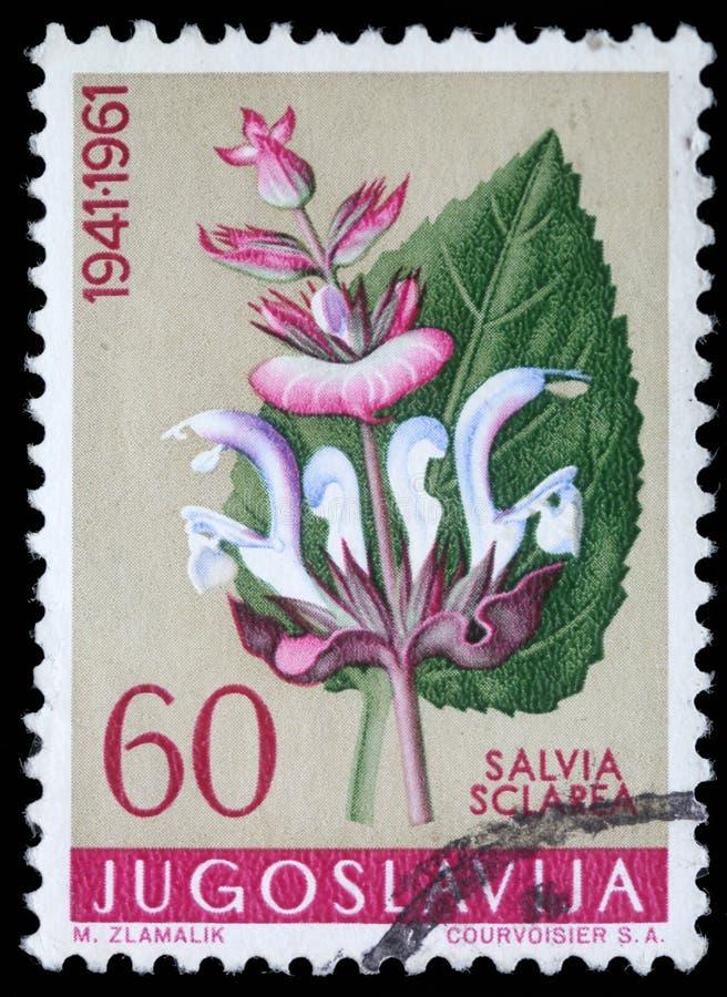 El sello impreso en Yugoslavia muestra el sabio de Clary imagenes de archivo
