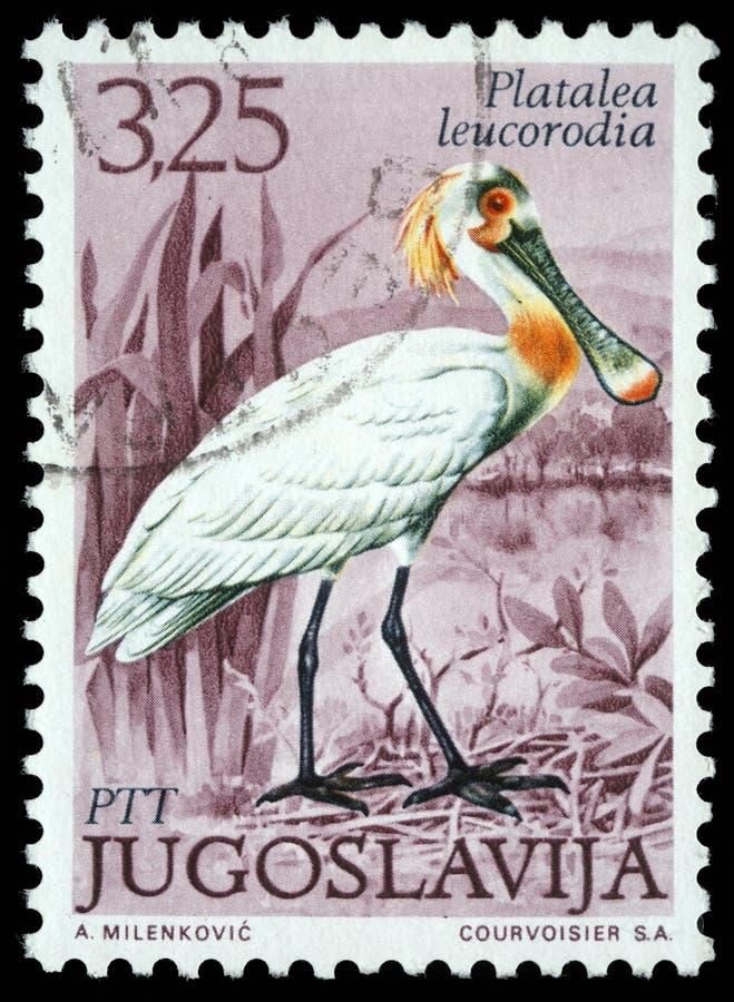 El sello impreso en Yugoslavia muestra el Spoonbill eurasiático imagen de archivo