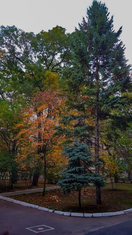 El sendero y la frontera blanca enmarcaron árboles coloridos de la caída fotos de archivo