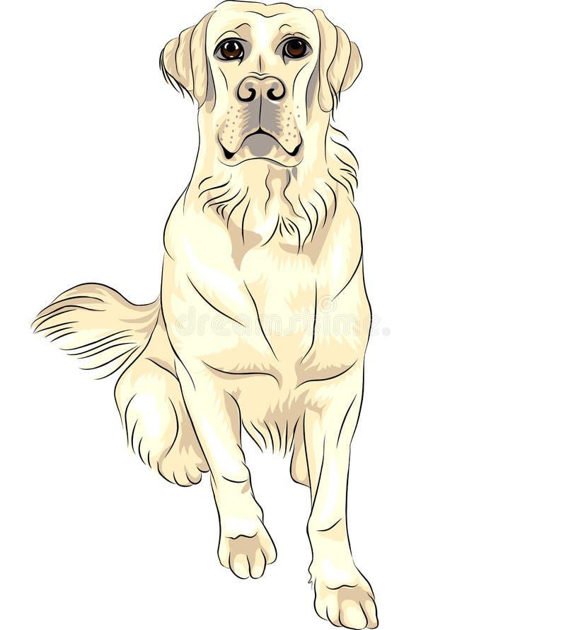 El sentarse blanco de los perros perdigueros de Labrador de la casta del perro stock de ilustración