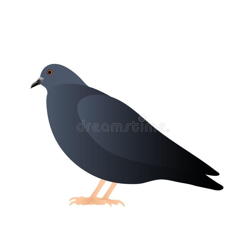 El sentarse de la paloma, aislado en el fondo blanco stock de ilustración