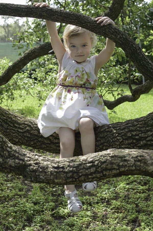El sentarse entre las ramas foto de archivo libre de regalías