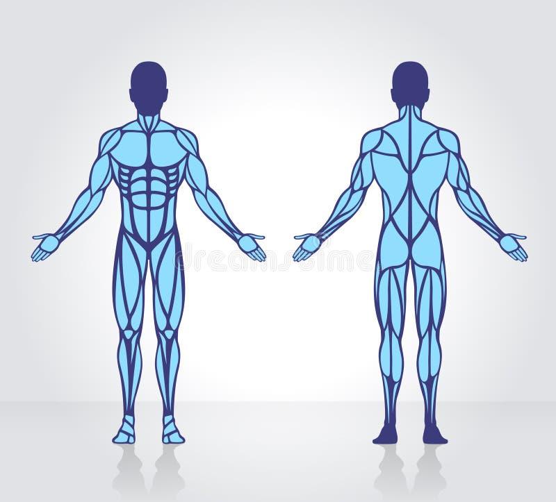 Fantástico Capítulo 6 Anatomía Y Fisiología Libro Para Colorear ...