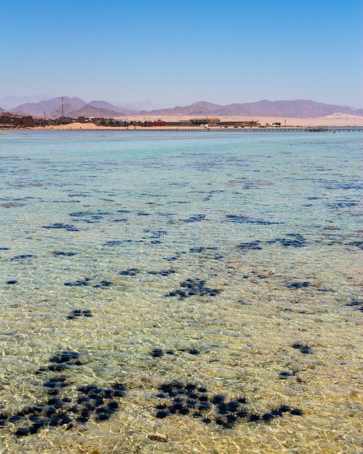 EL Sheikh Egypt de Sharm image libre de droits