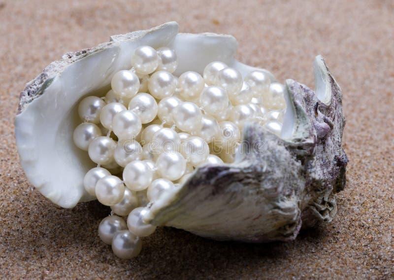 El shell exótico del mar con una perla rebordea mentiras fotos de archivo libres de regalías