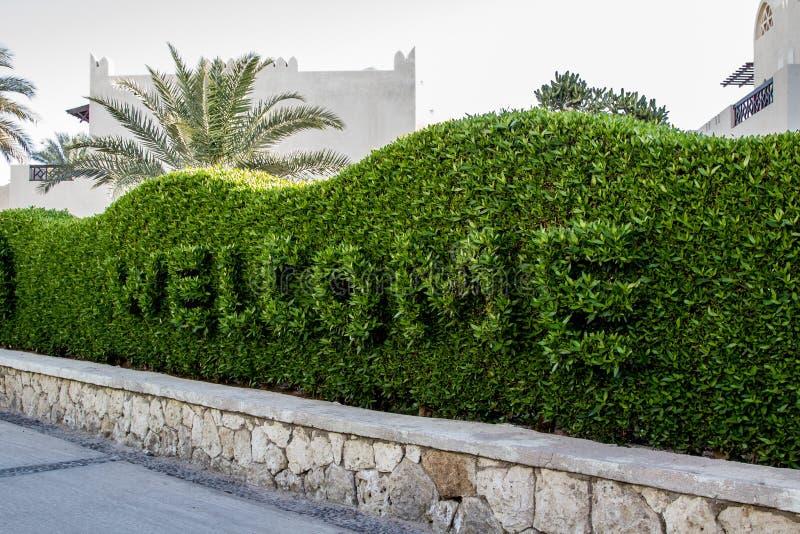 El signo positivo al hotel del complejo playero 5 del oasis del filón cortó en el arbusto verde imagenes de archivo