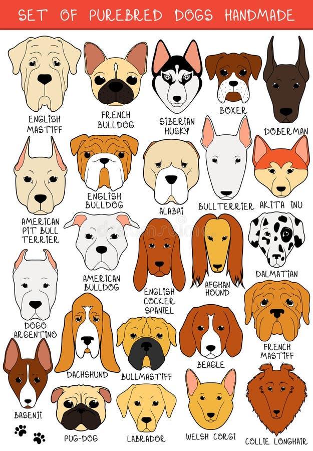 El sistema de 24 coloreó diversas razas de los perros hechas a mano Perro principal ilustración del vector