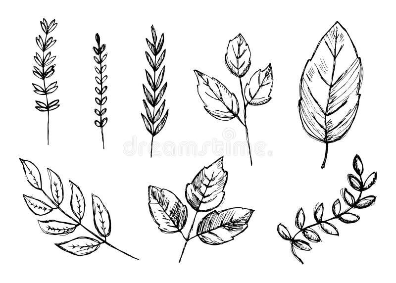El sistema de dibujos de la mano aisló bosquejos botánicos de las plantas del vintage libre illustration