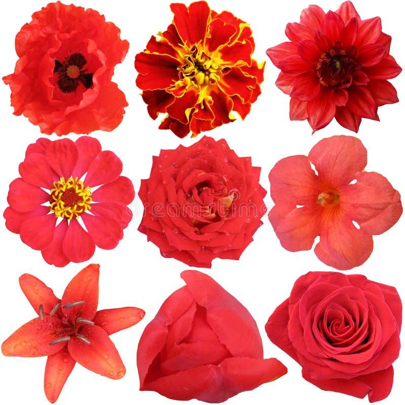 Download El sistema de flores rojas foto de archivo. Imagen de aislado - 42428904
