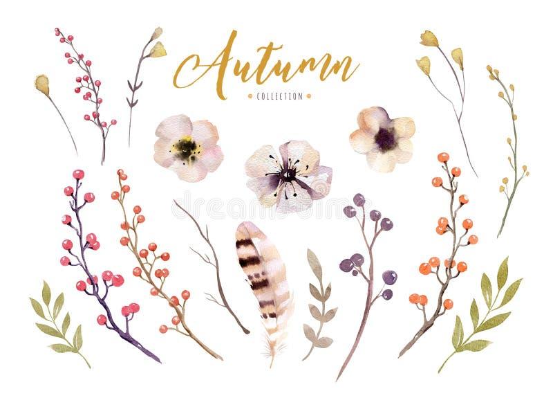 El sistema de la acuarela roja y amarilla del otoño se va y las bayas, decoración dibujada mano de los elementos del follaje del  stock de ilustración