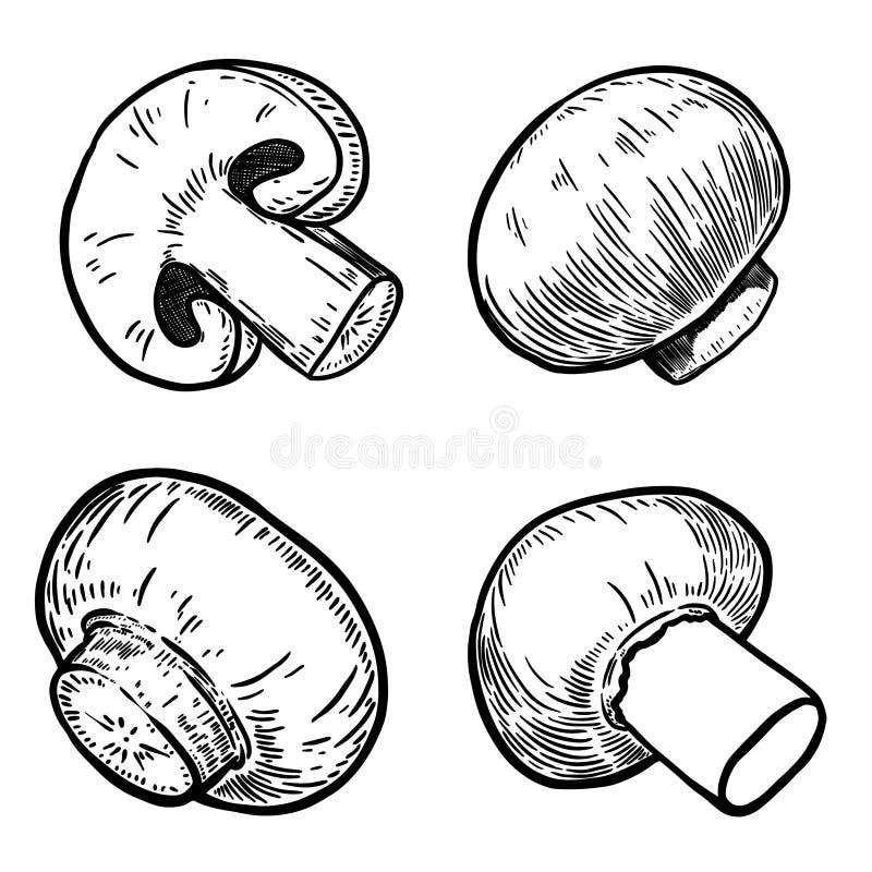 El sistema de la mano dibujado prolifera rápidamente los ejemplos Diseñe los elementos para el cartel, menú, bandera, menú ilustración del vector