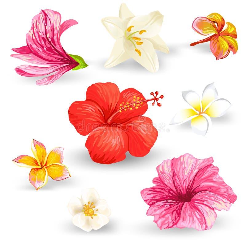 El sistema de los ejemplos del vector de hibiscos tropicales florece ilustración del vector