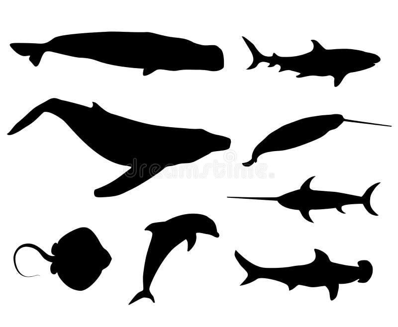 El sistema de negro aisló siluetas del contorno de los pescados, ballena, cachalot, esperma-ballena, tiburón, ilustración del vector