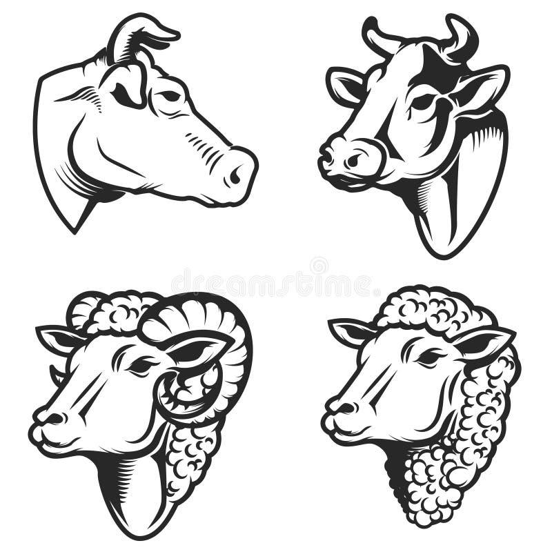 El sistema de vaca y de ovejas dirige en el fondo blanco Diseñe el elemento para el logotipo, etiqueta, emblema, muestra stock de ilustración