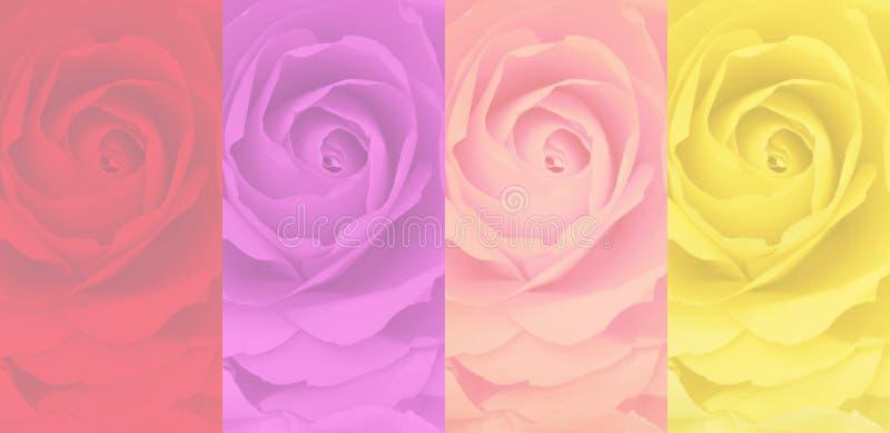 El sistema del fondo color de rosa borroso, 4 colorea, rojo, púrpura, rosa, amarillo fotos de archivo