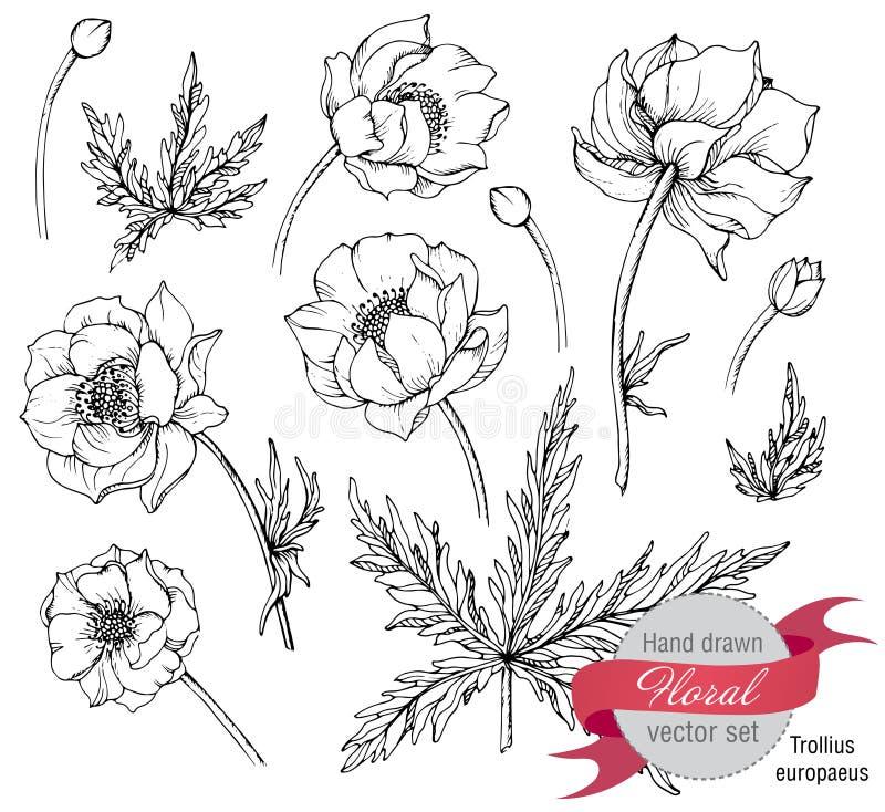 El sistema del vector de la primavera gráfica florece (el trollius) ilustración del vector