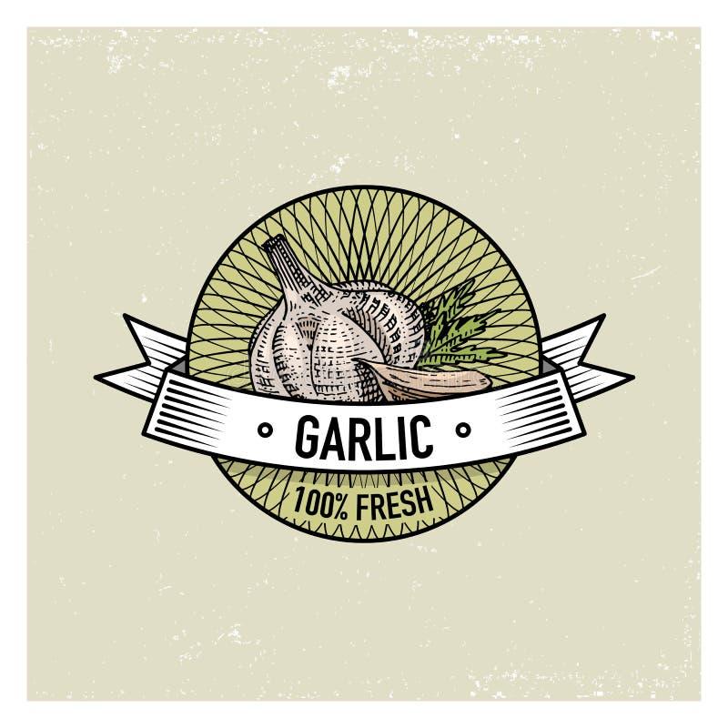 El sistema del vintage del ajo de etiquetas, de emblemas o del logotipo para la comida vegeterian, verduras da exhausto o grabada ilustración del vector