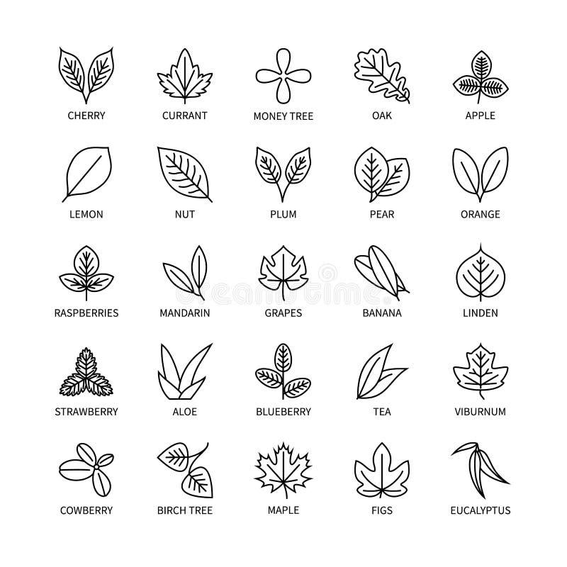 El sistema linear del vector del análisis del vegano de los iconos de las hojas útiles de elementos del diseño hojea símbolo sano fotografía de archivo libre de regalías