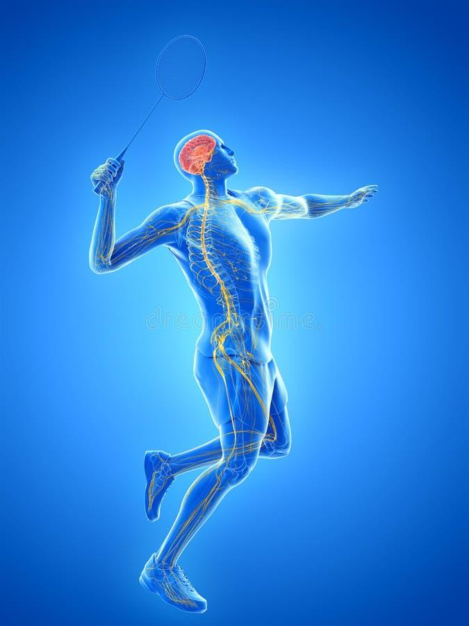 El sistema nervioso de un jugador del bádminton stock de ilustración